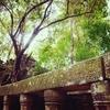 【2015 タイ・カンボジア④】ベンメリア遺跡観光