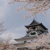 【お写ん歩】犬山城で見た桜風景