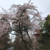 【洛西 正法寺】静謐な古刹で心静かにお花見