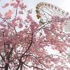 2017/4/9 カピバラのウラ側に迫る!