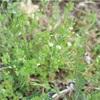 雑草だけどかわいいよね グランドカバーは野の花でいいじゃん