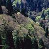 京都北山 春から夏へ(芦生の森)