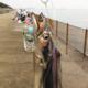 【釣行記】快釣サヨリと白昼のタチウオ@南芦屋浜ベランダ[2016.12.04]