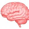 【水素セラピスト検定】ヘルスケア編 『神経系と脳の働き Part.1』