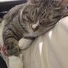 風ちゃんはパパのひざをベッドか何かだと思っている。