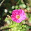 真冬なのに夏の花