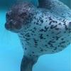 岡山県渋川マリン水族館でミッション「ニモを見つけ出せ!」にチェレンジしてきた!