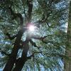 ◆木漏れ日