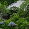 浄慶寺のあじさい