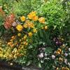 春の庭、限定公開中@アークヒルズ