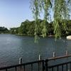 都内穴場癒しスポット「洗足池公園」に行ってきた