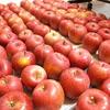 リンゴの収穫