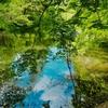 地獄谷新池(奈良県奈良)