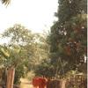 偽りのフィルターに気づけた花冠を作る少年との出会い〜カンボジア〜