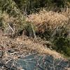 1号基:樹木・竹の処理(1日目)