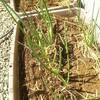 我が家のプランター栽培のラインナップ