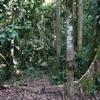 虫、虫、虫ーーー!!!in ジャングル