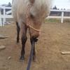 陽の大人の馬になる練習