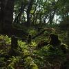 【山梨】大菩薩嶺 旬のモモを探して、苔生す大菩薩の森