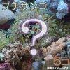 35cmキューブのオーバフロー水槽に新しいサンゴをいろいろ追加しました