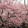 日を追うごとに春の息吹を感じる