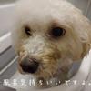 ~愛犬と家でのお風呂~