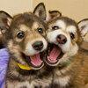 リア充な犬画像【18枚】