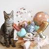 愛犬・愛猫・うさぎさん・ペットのバースデーにバルーンで記念撮影はいかがですか?