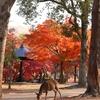 晩秋の京都・奈良 ⑤奈良公園