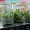 タイ雑記「食用ひまわりの芽」