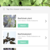 授業で使えるかも?:Plant identifierな2つのアプリ「PictureThis」と「iplant」