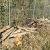 薪ストーブ始生代82 田んぼ薪は泥に濡れつつ