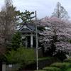 ご近所 桜めぐり 2