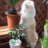 植物とニコちゃん