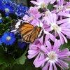 伊丹市昆虫館2蝶温室と魅惑のベンチ