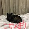 聖Valentine day 2019の終末〜_φ(・_・危険ナ物ハチェックダッ!