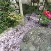 鎌倉 牡丹園のリス