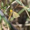 🐞荒川河川敷で昆虫を撮影に行きましたが・・
