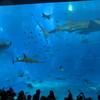 沖縄旅行 青い海白い砂浜 2日目 水納島(みんなしま) 美ら海水族館