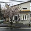 雨で桜が・・・