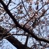 桜の咲く週末