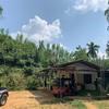スリランカで胡椒農園へ