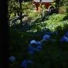 梅雨入り時、単焦点で撮り歩いた京都 その3