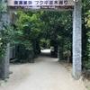 【沖縄】備瀬のフクギ並木。日本一の道の駅。これからのスポット、瀬長島。
