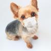 犬のアレルギーが子供に出てしまった!レンタル犬でこんな症状が!