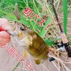 【初バス!】6月6日入間川でスモールのスモール!最初の1匹を釣る方法!