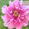 荒尾市で見頃を迎えた二つの花(熊本県)