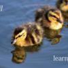 概念学習・観察学習・問題解決