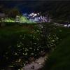 LightroomとPhotoshopを使って、蛍の光を比較明合成でたくさん写す撮影方法