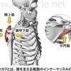 【解剖学Ⅱ-2】上腕の筋